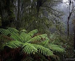 Gondwana Forest