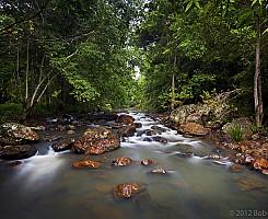 Obi Obi Creek 2