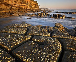 Golden Barnacles 2
